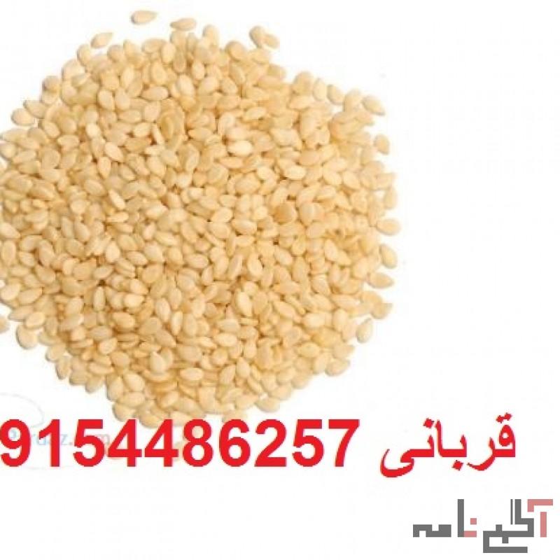 فروش عمده کنجد افغانی و کنجد پاکستانی با بهترین قیمت